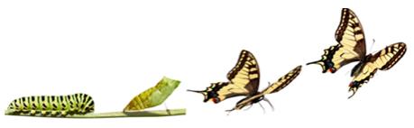 Chenille Papillon (2)